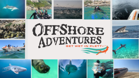 Swim with seals and more at Offshore Adventures