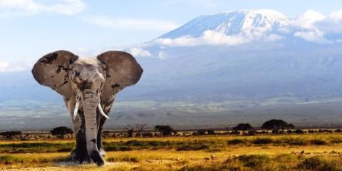 African Safari Travel