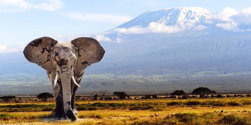 africqa elephant