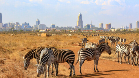 Facts About Nairobi National Park-the World's Only Urban Park of it's kind!