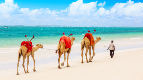 Why You Should Travel to Mombasa, Kenya, in Your Lifetime