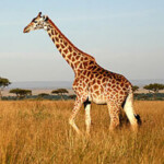 Profile picture of Casolodge Travel and Safaris Ltd