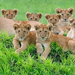 Profile picture of Budget Safaris Tanzania