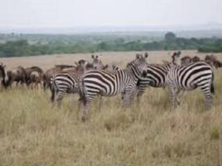Mara Reserve
