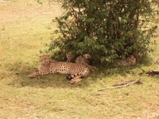 Tano Bora in Maasai Mara Game Reserve