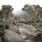 africa-natural-tours-towards-kilimanjaro