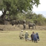 lion-camp-by-mantis-elephant-on-foot