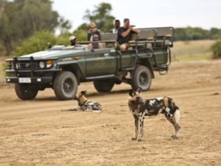 Lion Camp by Mantis Game Veiwing Wilddogs